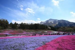 羊山公園と武甲山