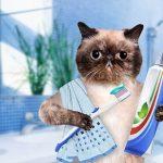 猫の歯のケアはフードでできる?歯磨きが苦手な猫の歯磨き方法とは?